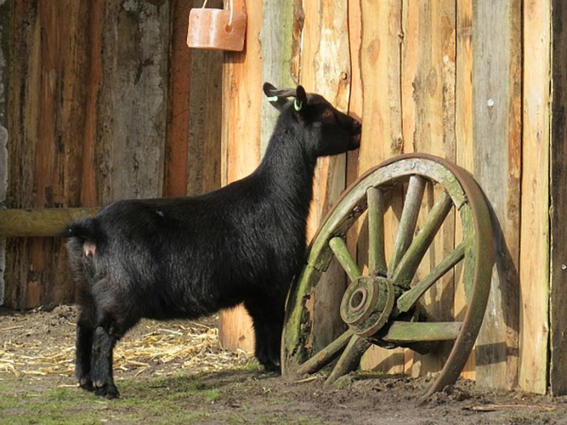 kinderboerderij meerdal